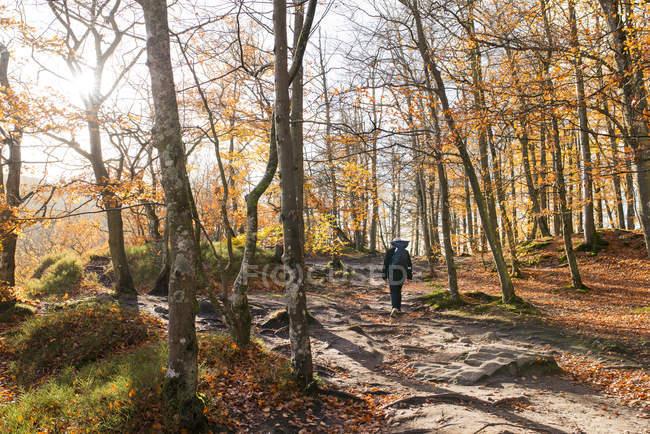 Человек, ходить в лес осенью — стоковое фото