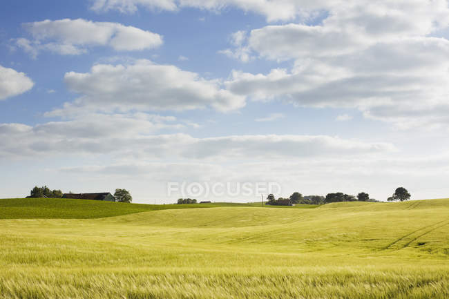 Verde paisaje del balanceo bajo cielo azul nublado - foto de stock
