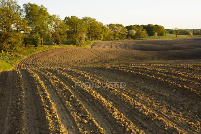 Campo agrícola depois de arar à luz do sol à noite — Fotografia de Stock