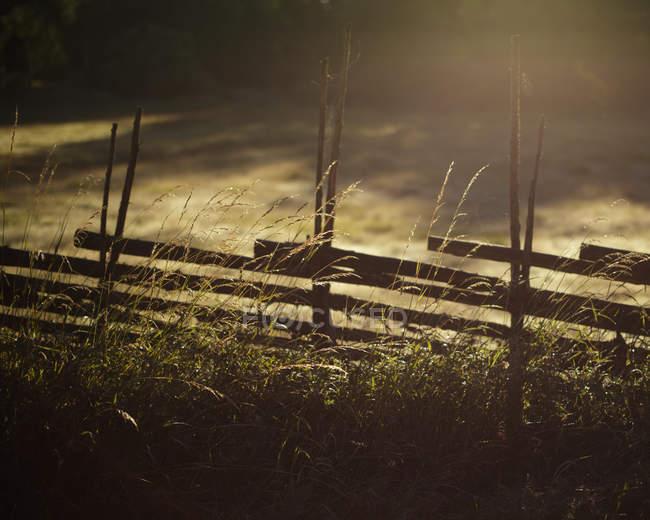 Cerca de madeira e grama alta na luz solar retroiluminada — Fotografia de Stock