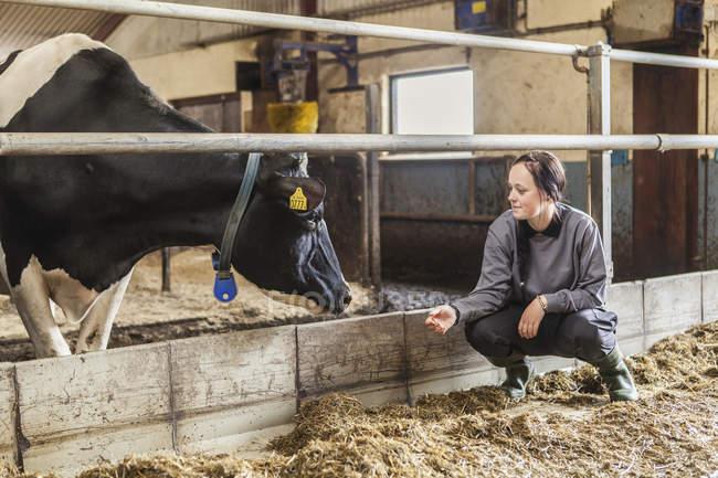 Weibliche Milchviehhalter am Arbeitsplatz, selektiven Fokus — Stockfoto