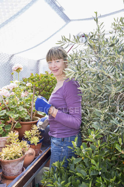 Portrait of smiling woman gardening in greenhouse — Stock Photo