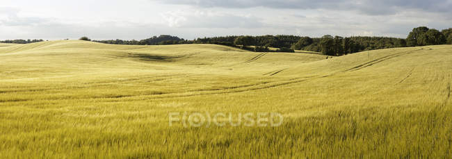 Green rolling landscape under blue cloudy sky — Stock Photo
