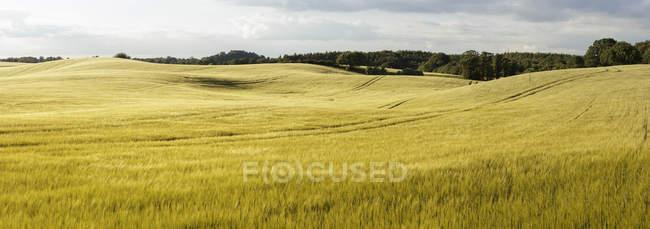 Paysage vallonné vert sous ciel nuageux bleu — Photo de stock