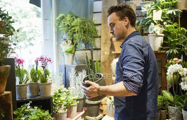 Вид сбоку флориста, работающего в цветочном магазине — стоковое фото