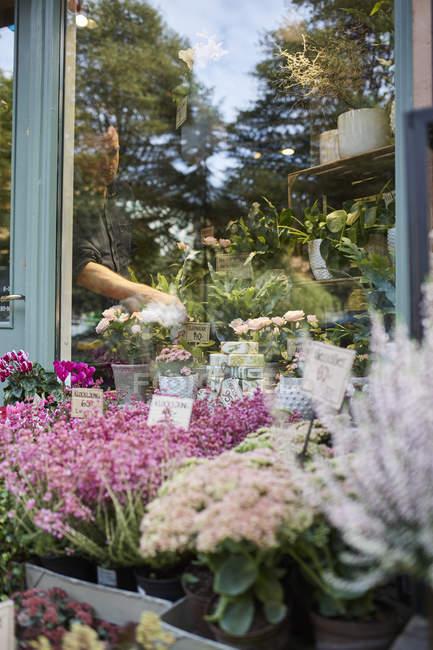 Флорист в цветочный магазин, фокус на фоне — стоковое фото