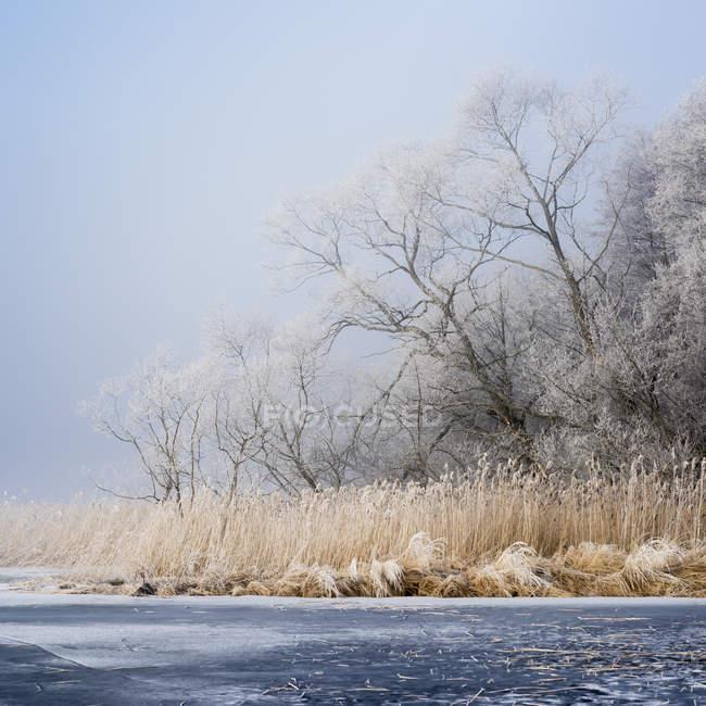Winterlandschaft mit zugefrorenen Fluss und Bäume — Stockfoto