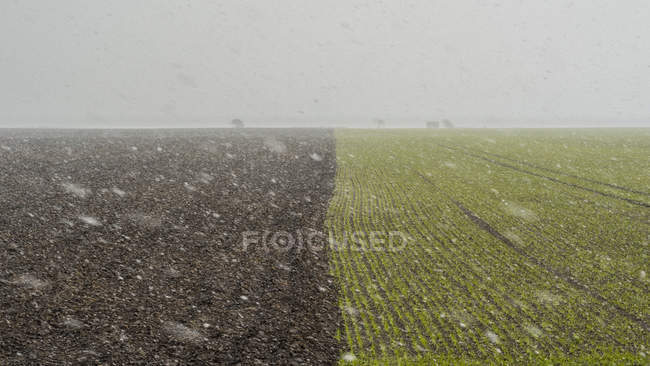 Rural scene with blizzard on green field — Stock Photo