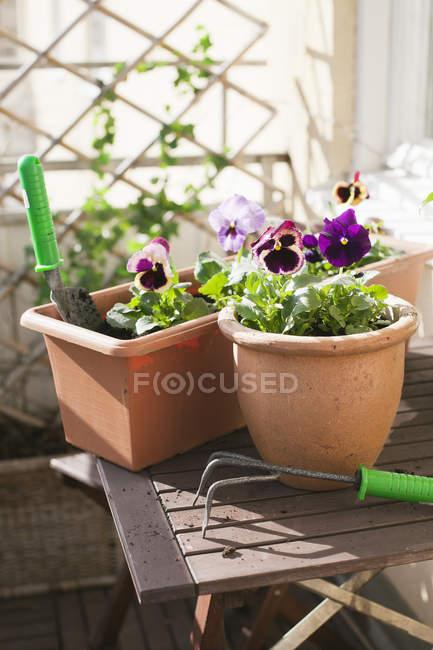 Vista frontale di attrezzature da giardinaggio su tavolino — Foto stock