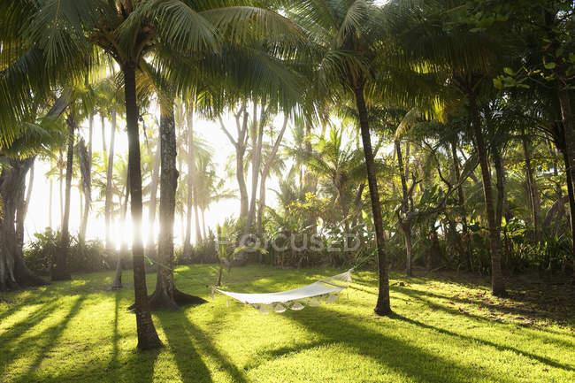 Hängematte zwischen Palmen an Costa Rica — Stockfoto