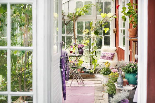 Plantes dans la salle de soleil, scène tranquille — Photo de stock