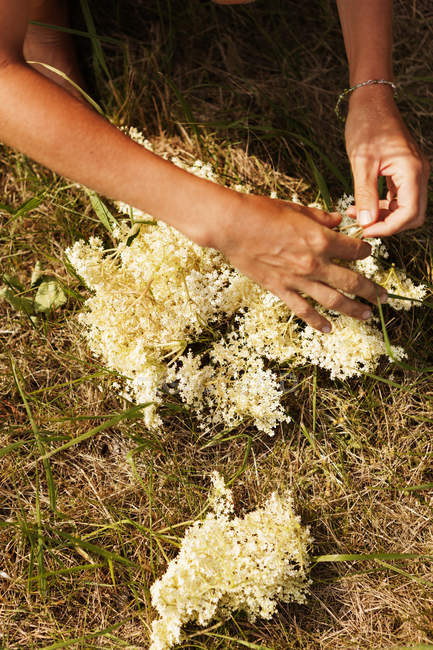 Підвищені погляд жінки, що тримає квіти — стокове фото