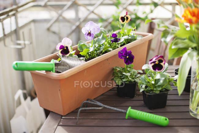 Передний вид садового оборудования на маленьком столе — стоковое фото