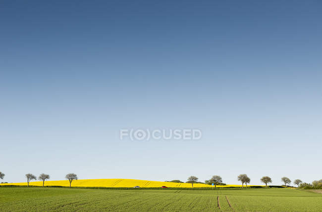 Мальовничий вид на чисте небо над поля — стокове фото