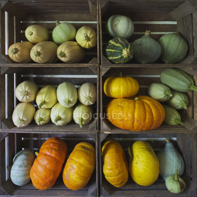 Fresh pumpkins in six wooden boxes — Stock Photo