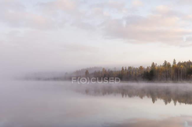 Бору на березі озера в туман, Північна Європа — стокове фото