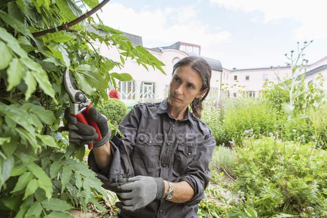 Woman pruning bushes in garden, — Fotografia de Stock
