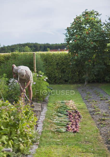 Senior man gardening, selective focus — Stock Photo
