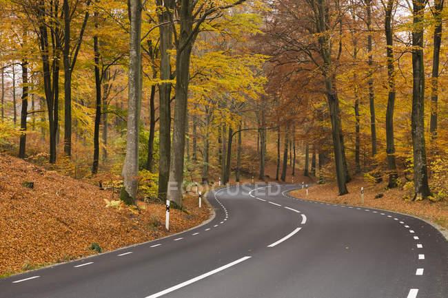 Vista panoramica della strada nel bosco in autunno — Foto stock