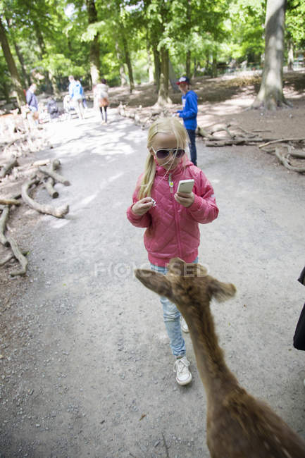 Girl photographing deer in wildlife reserve — Photo de stock