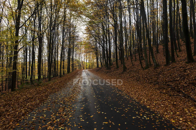 Vista panoramica della strada rurale in Svezia — Foto stock