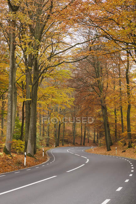 Road in autumn forest, northern europe — Stock Photo