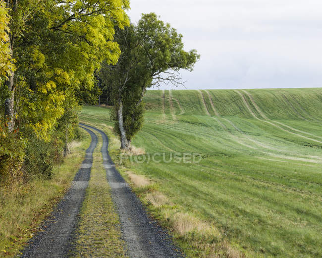 Rural landscape with dirty road, rural scene — Stock Photo