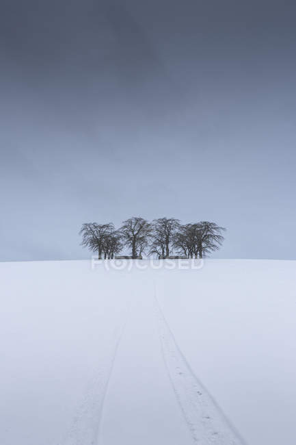 Scenic view of trees at winter against overcast sky — Stock Photo