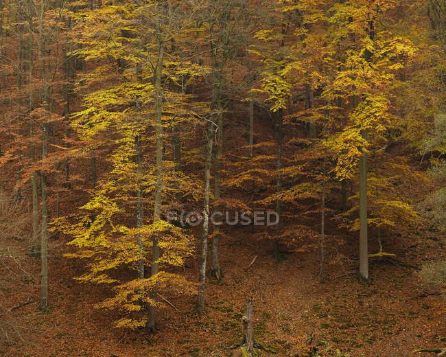 High angle view of trees on hill at autumn — Stock Photo