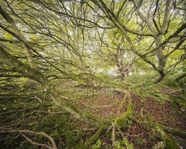 High angle view of branches trees in forest — Stock Photo