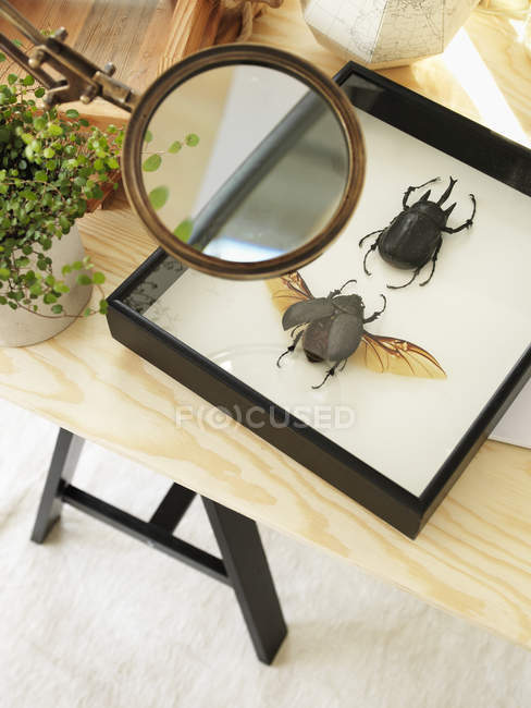 Elevated view of collection of insects, selective focus — Stock Photo