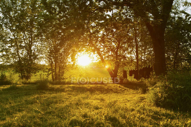 Scenic view of trees at evening, lens flare — Stock Photo
