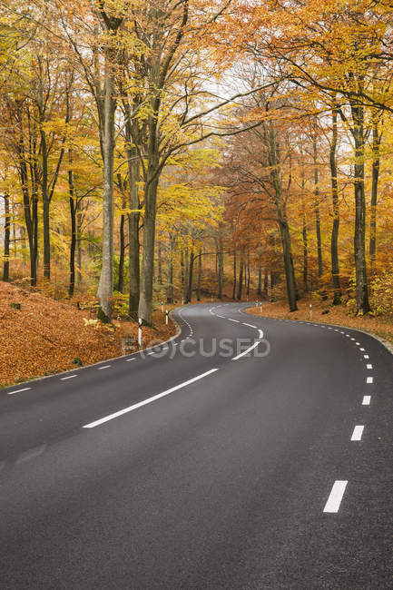 Road in forest, Soderasens National Park — Stock Photo
