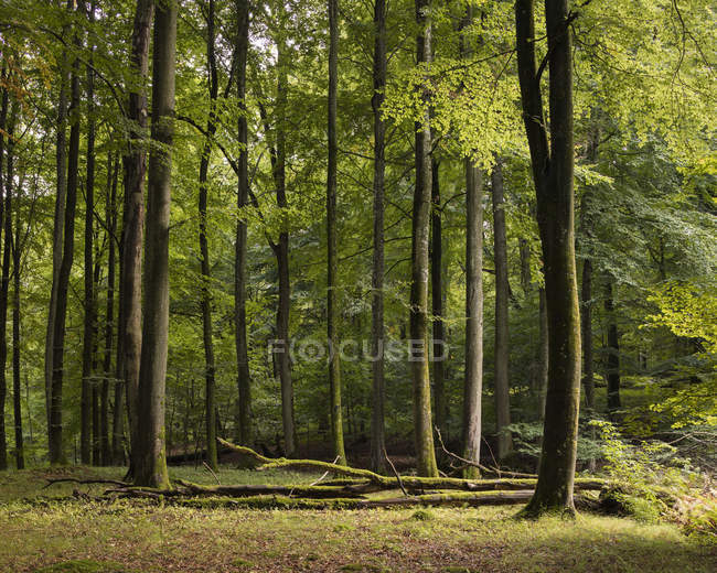 Scenic view of green forest, northern europe — Stock Photo