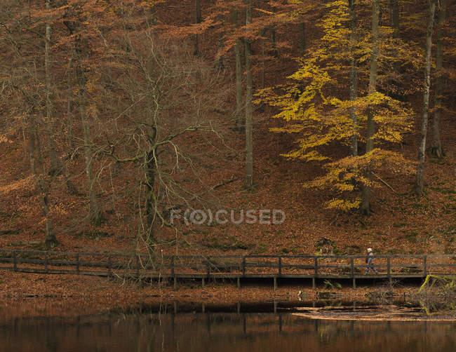 Passeio pedestre por lagoa na floresta — Fotografia de Stock