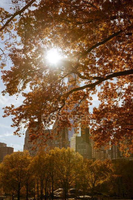 Feixe de sol através de árvores de outono em Central Park, Nova York — Fotografia de Stock
