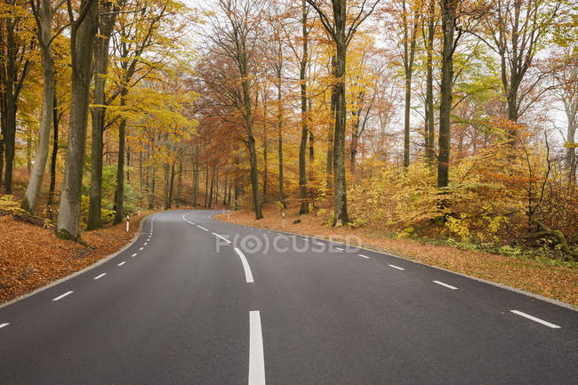 Scenic view of road in forest at autumn — Stock Photo
