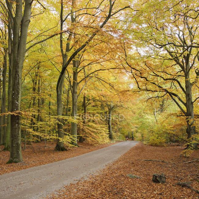 Vista panorámica del camino de tierra en el bosque - foto de stock