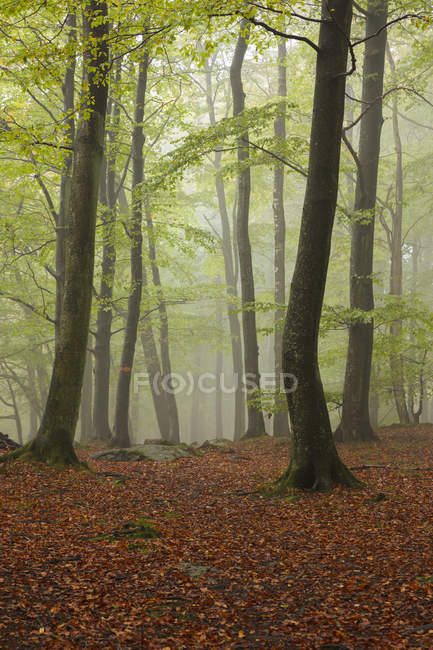 Scenic view of autumn forest in fog — Stock Photo