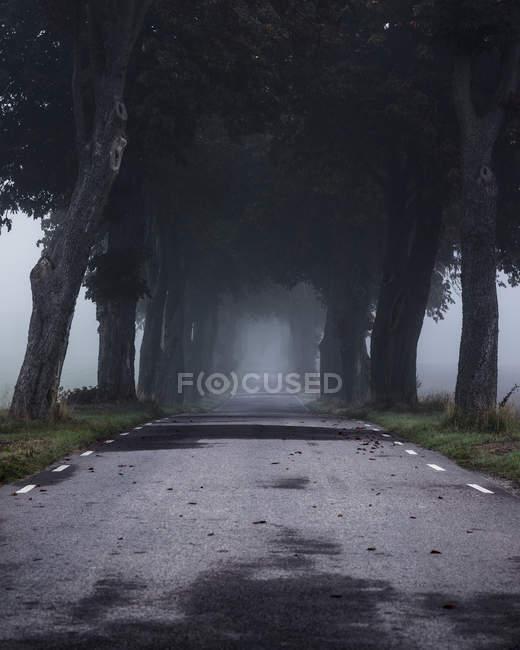 Strada vuota nella nebbia, Europa del Nord — Foto stock