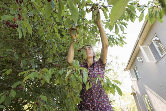 Низкий угол зрения женщины, работающей в саду — стоковое фото