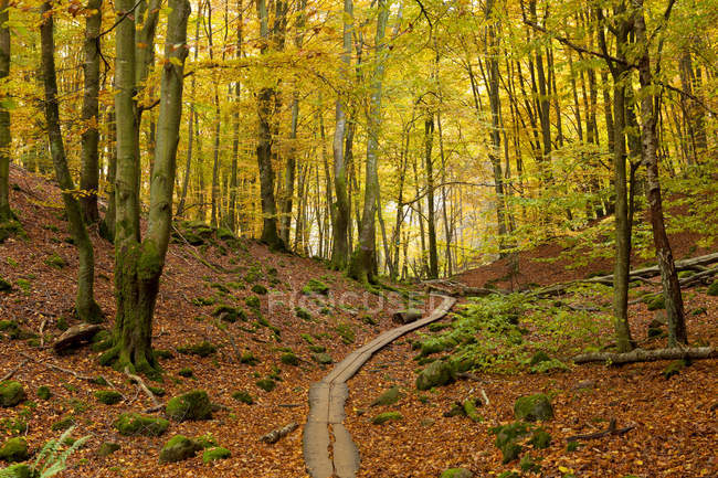 Wooden overpass through national park in autumn — Stock Photo
