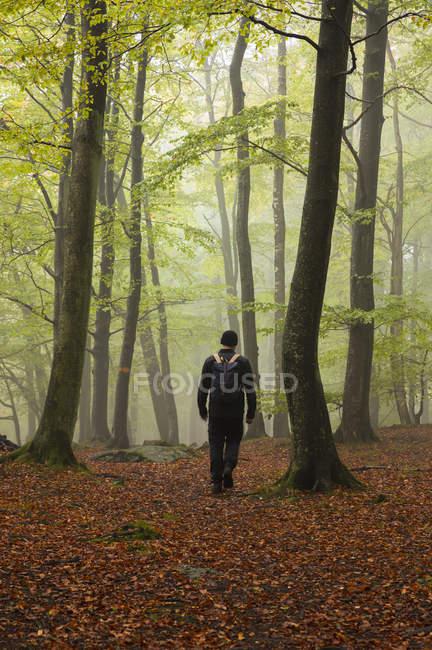 Людина Піші прогулянки в ліс, Королівства Швеція — стокове фото