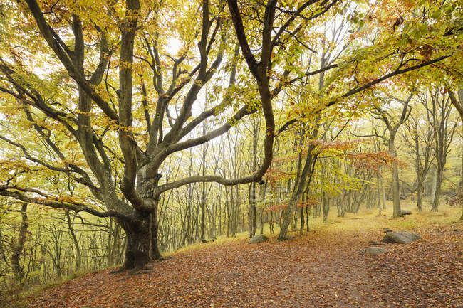 Autumn forest with yellow leaves, stenshuvud national park — Stock Photo