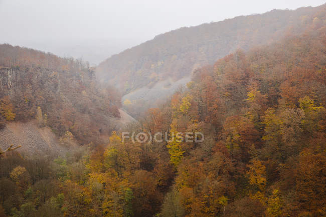 High angle view of forest in fog — Stock Photo