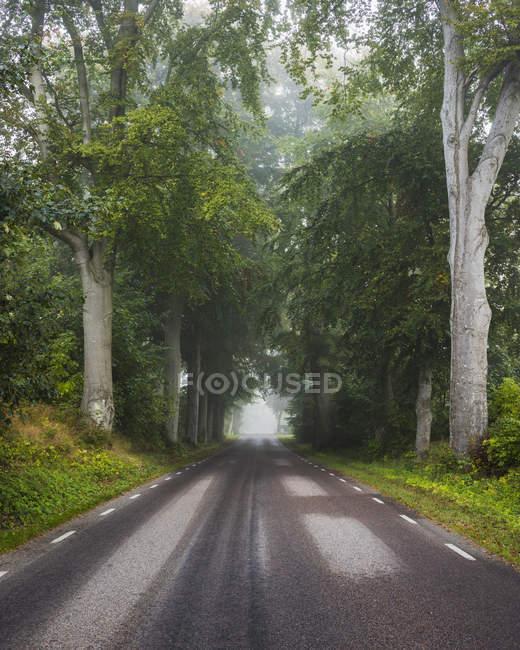 Strada vuota nella foresta, Europa del Nord — Foto stock