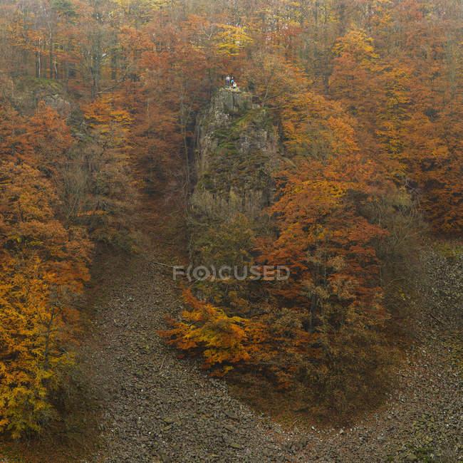 Vista panorâmica do penhasco e da floresta — Fotografia de Stock
