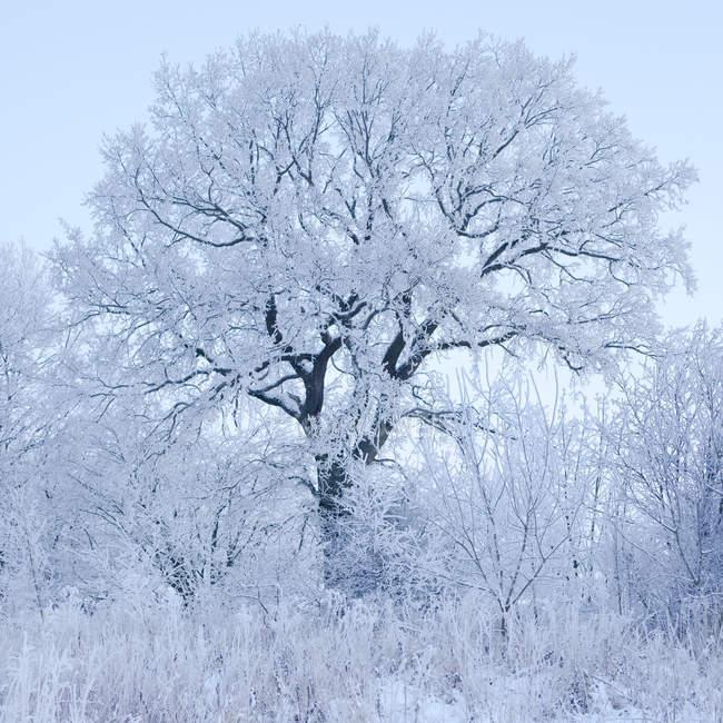 Gefrorene Bäume gegen Himmel, ruhige Szene — Stockfoto