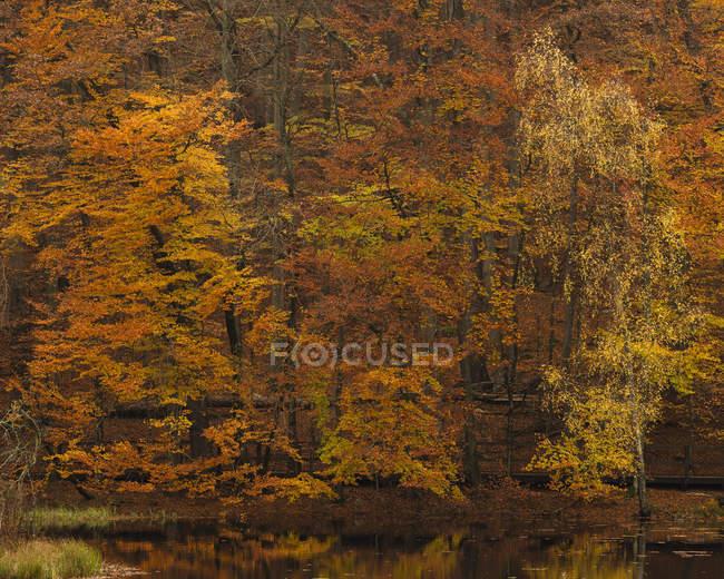 Bäume im Teich, Nordeuropa — Stockfoto