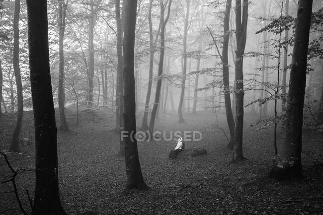 Осенний лес в тумане, селективный фокус — стоковое фото